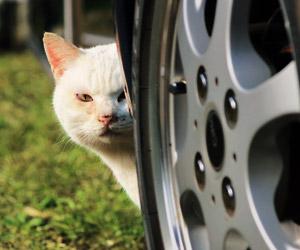 猫が見てる